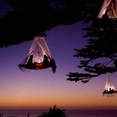 Tree Camping on the Picific Coast, Elk - California