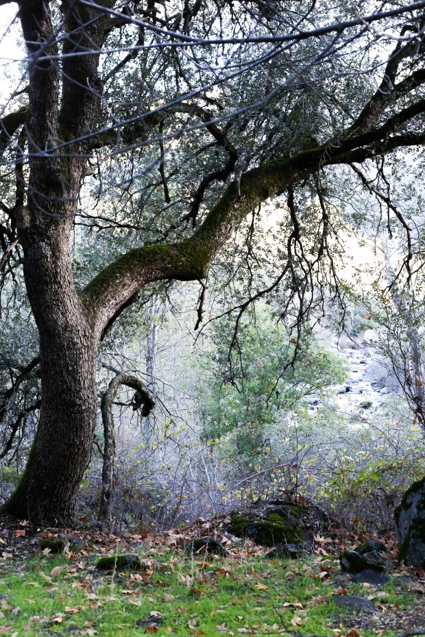 Sequoia (12 of 17)