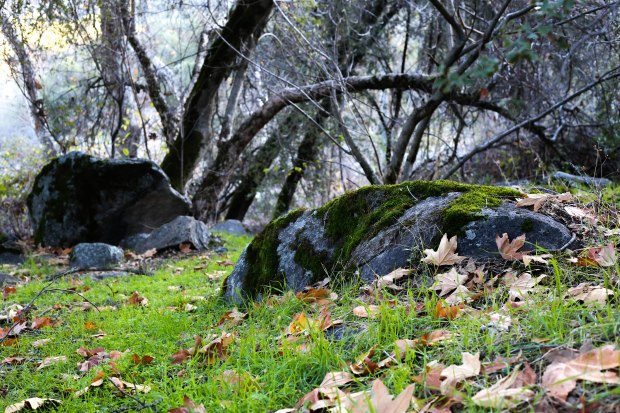 Sequoia (14 of 17)