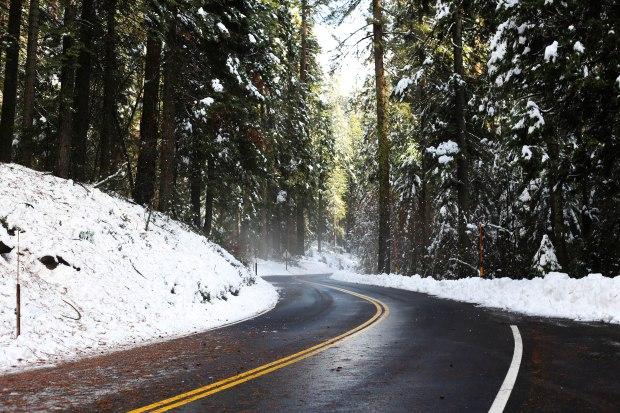 Sequoia (7 of 17)
