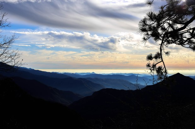 Sequoia (9 of 17)