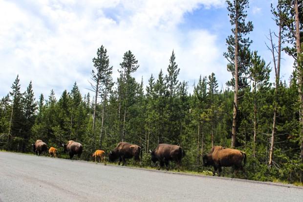 Montana Trip (29 of 63)